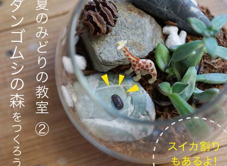 夏のみどりの教室 ② ダンゴムシの森を作ろう