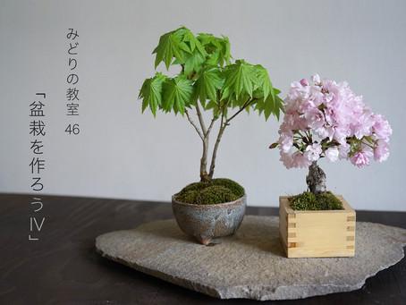 みどりの教室vol.47 盆栽を作ろうⅣ