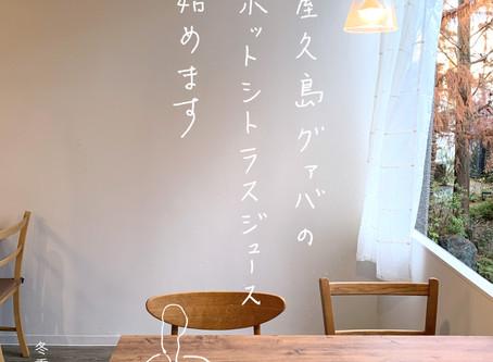 屋久島グァバのホットシトラスジュース