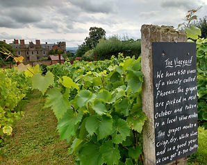 Croft Castle vineyard