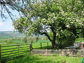 Cider cycling holidays in Herefordshire