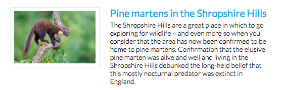 Pine Martens in Shropshire