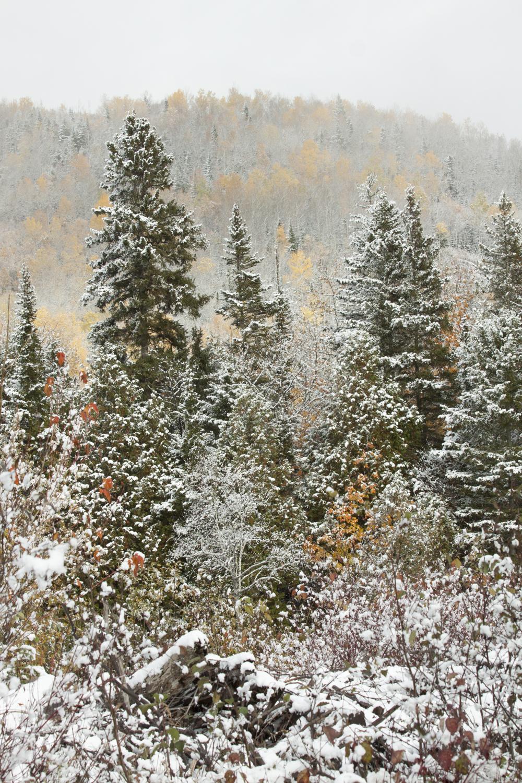 La neige couvre les feuilles