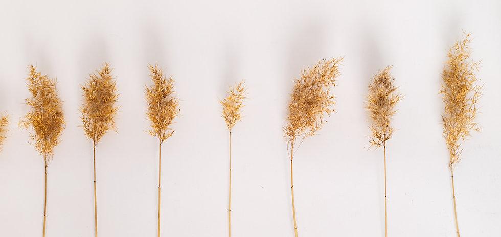 Dry Reeds_edited.jpg