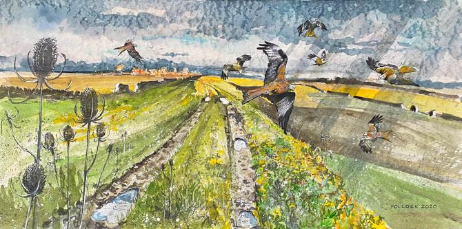 Red Kites Near Stonesfield
