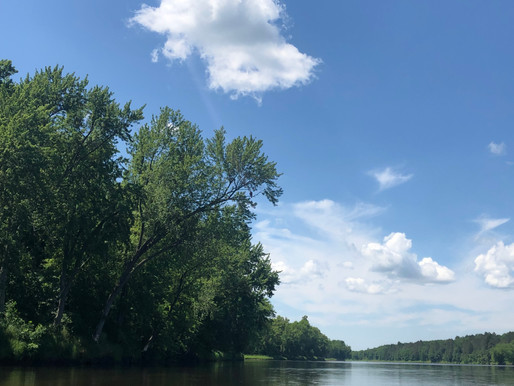 Water Quality: How is it Connected to Our Forests?