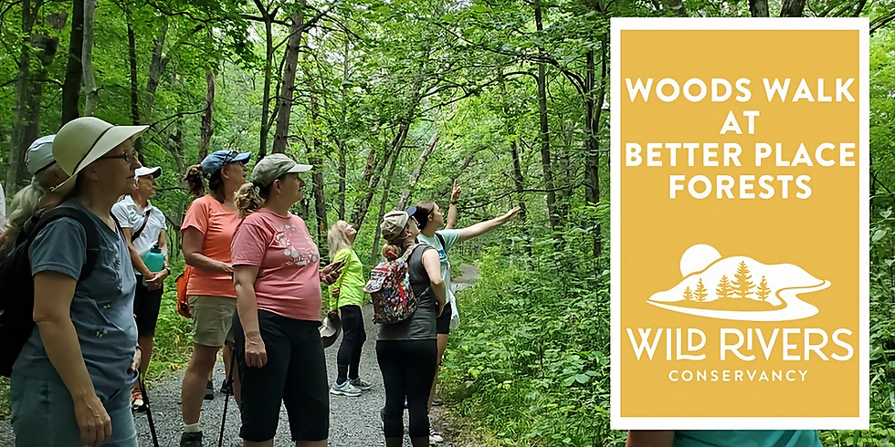 Woods Walk at Better Place Forests