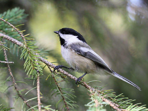 Birdwatching in Your Wisconsin and Minnesota Woods