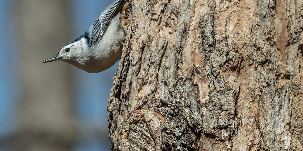Woodland Owner Webinars: Forests for the Birds