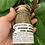 Thumbnail: Medicinal Herbs