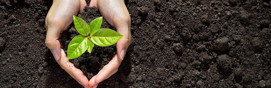 UK_advice-gardening-seeds-cuttings-growi