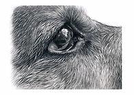 dog eye.jpg