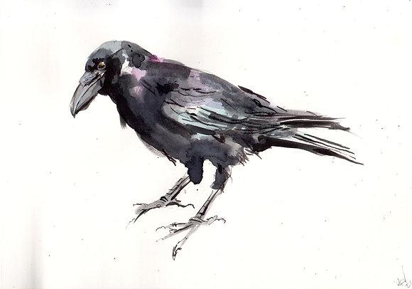 Watercolour Crow 5.  A5 size hand-painted artwork. Landscape orientation.