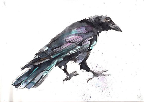 Watercolour Crow 3  A5 size artwork