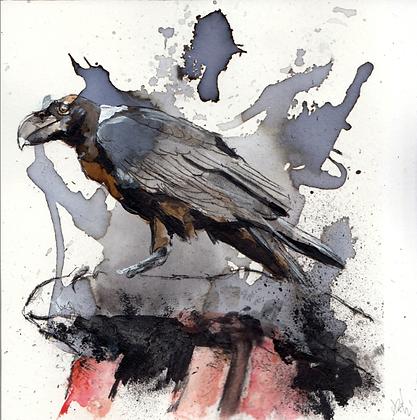 White-necked raven original artwork 14x14cm