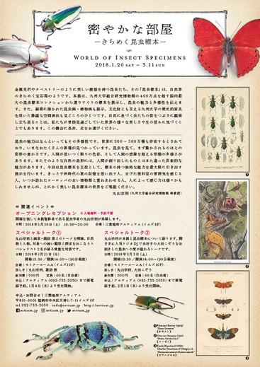密やかな部屋-きらめく昆虫標本- フライヤー裏