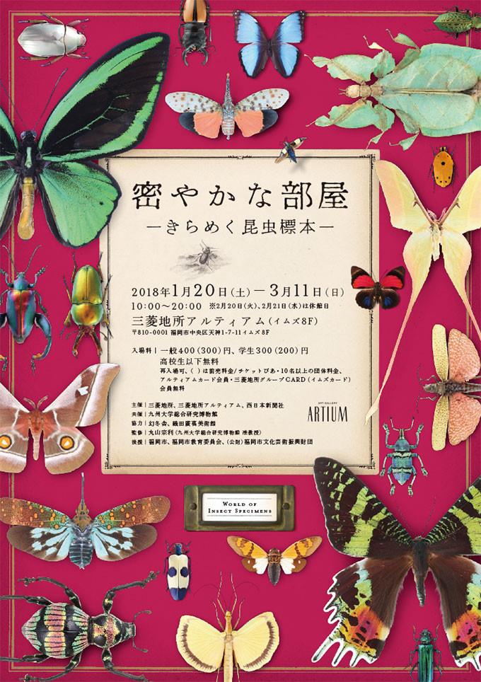 密やかな部屋-きらめく昆虫標本- フライヤー