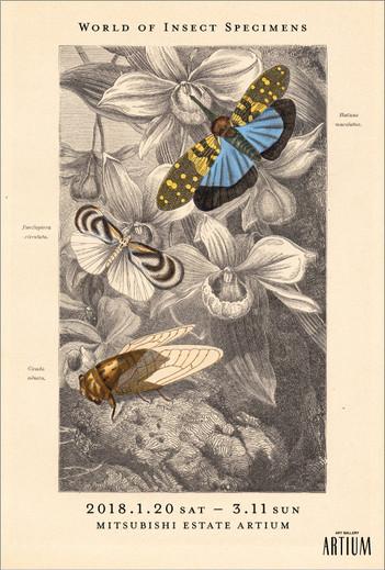 密やかな部屋-きらめく昆虫標本- ミニフライヤー