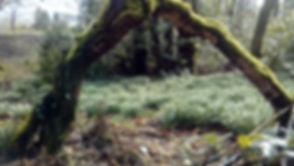 Akay-woods-Sedbergh.jpg