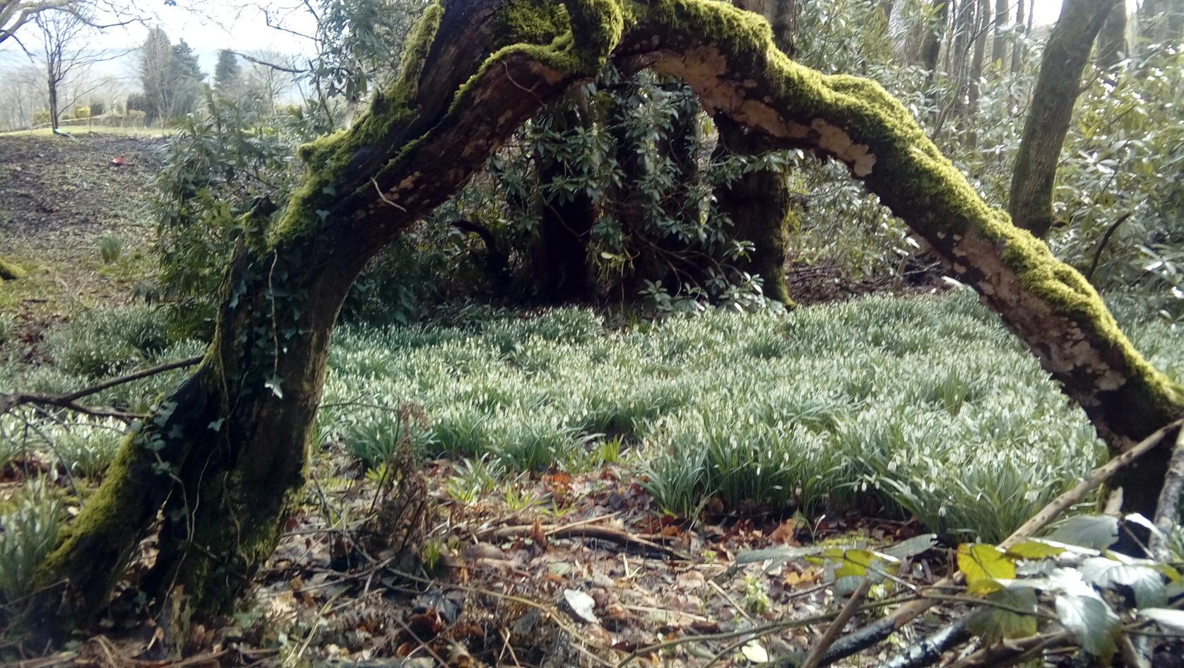 Akay woods Sedbergh YorkshireDales