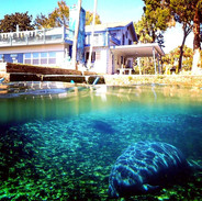 The manatees have the best view!