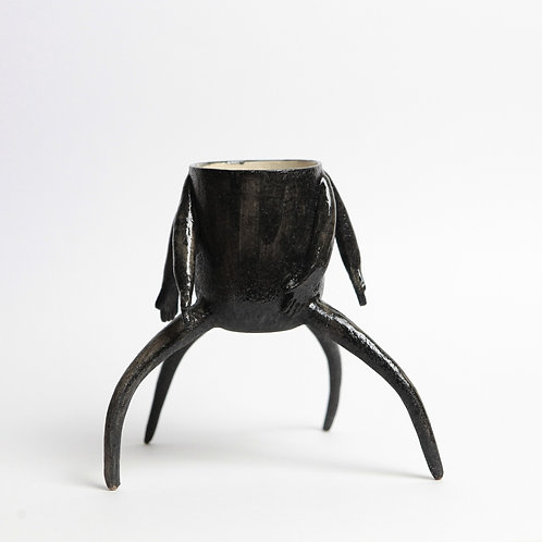 Merveilleux Araignée