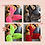 Thumbnail: LOTTIE Lace Body & stockings ~ Red, Black & Neon Pink or Yellow