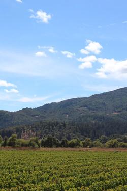 Hills of Sonoma