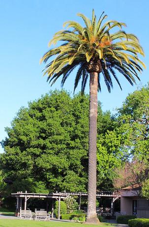 Manor Palms