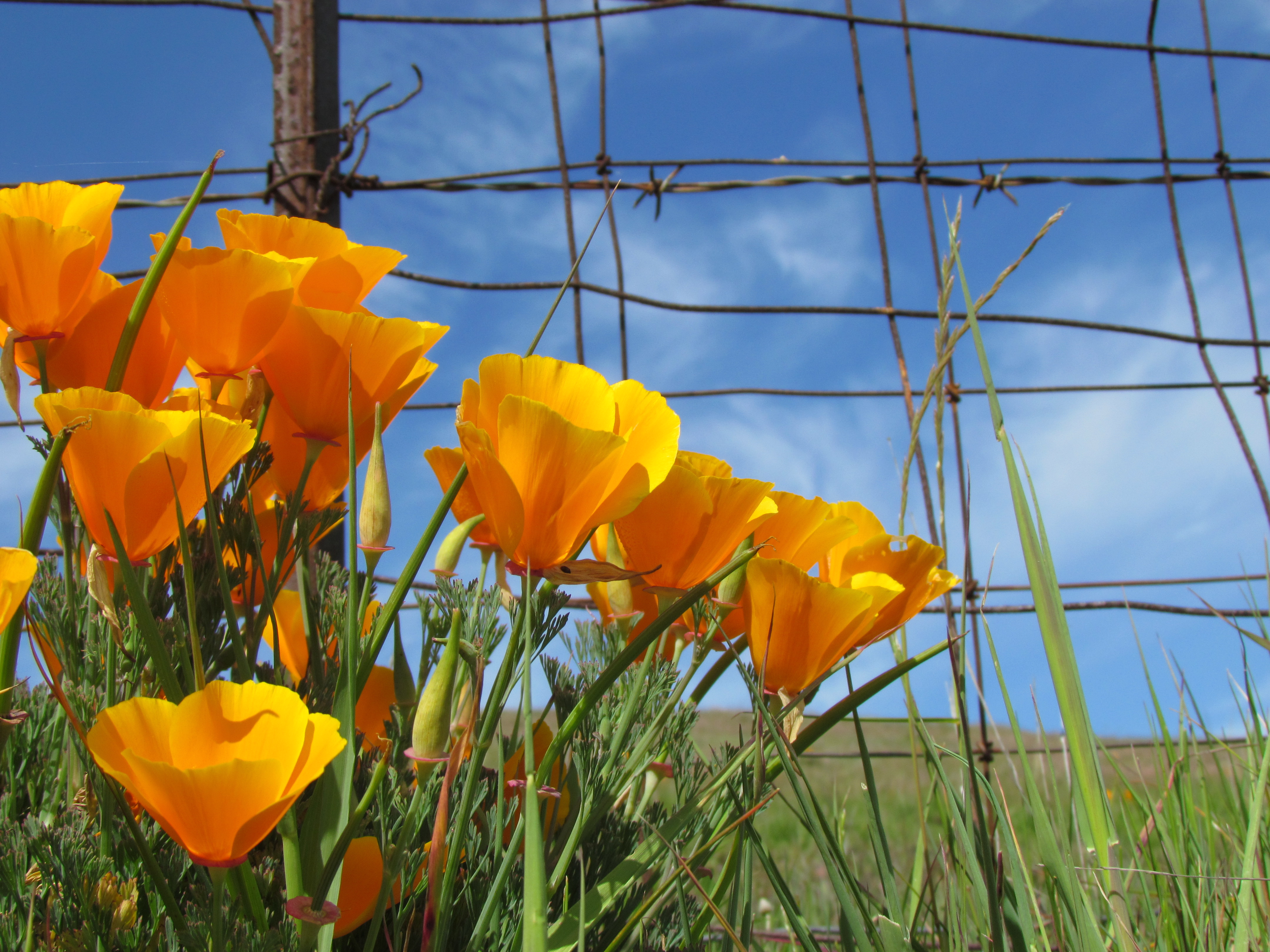 Sonoma Valley spring