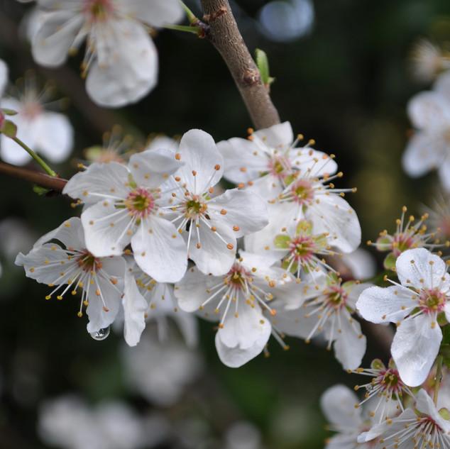 Spring beauty at FAHA Manor