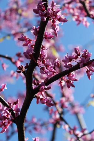 Manor spring