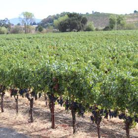 Near FAHA Manor are many wineries