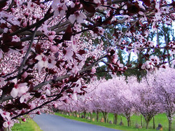 Sonoma spring