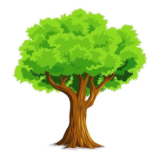 KT arbre.jpg