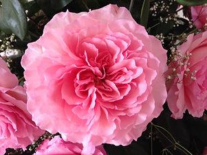 Mayra's Rose1.JPG