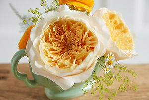 Effie (Ausgray) by David Austin Roses Ca