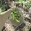 Thumbnail: Good Nature Planted Trees