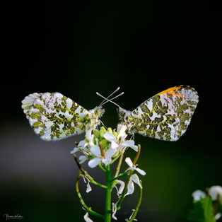 Makrofotografie Schmetterlinge