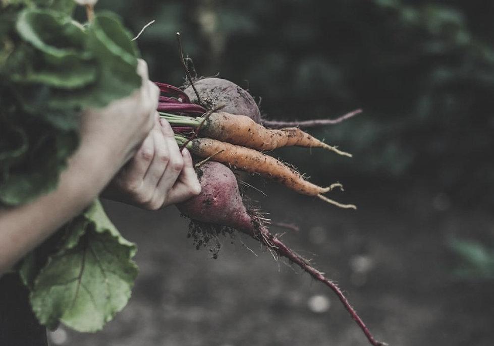 vege-vegetable-garden-gardening-2_edited