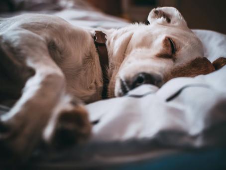 10 Gründe, warum Du einen Hund aus dem Tierheim retten musst!