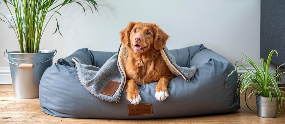6 Dinge, die Du vor dem Einzug deines Tierheim-Hundes beachten solltest