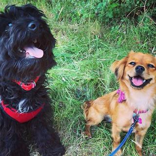 Buddy & Maisie