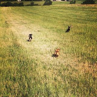 The sausage dog gang