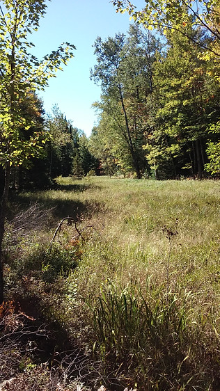 The Small Marsh - Three Lakes, WI
