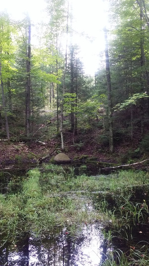 Pool of Life - Three Lakes, WI