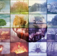 Polyptych: Tree Emotions