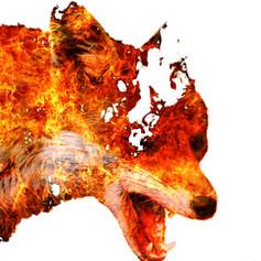 Double Exposure: Fire Fox