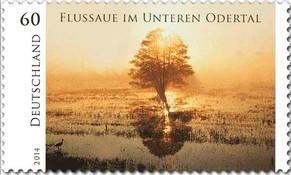 norbert-rosing--flussaue-odertal-briefma