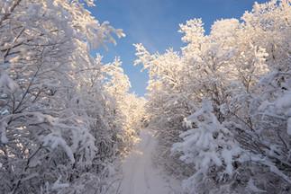 Winter-Spaziergang